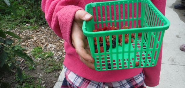 Volunteer holding empty basket