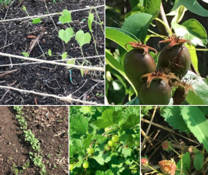 Montage of seedling pictures